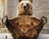 foto binatang lucu