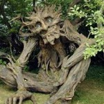 gambar pohon aneh unik dan ajaib