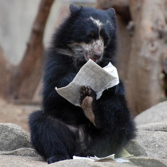gambar beraung lucu baca koran