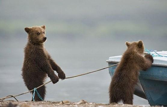 gambar beraung lucu bertingkah seperti nelayan