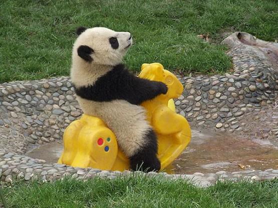 gambar beruang lucu banget