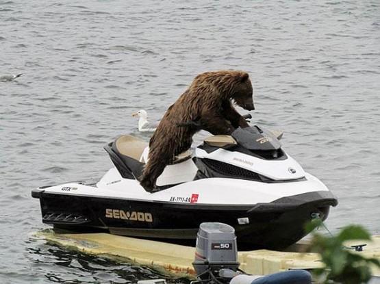 gambar beruang lucu banget terbaru