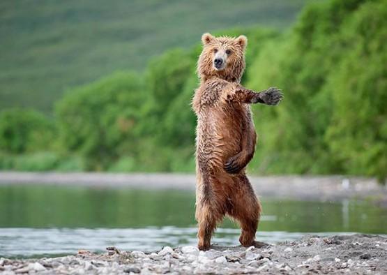 gambar beruang lucu foto model