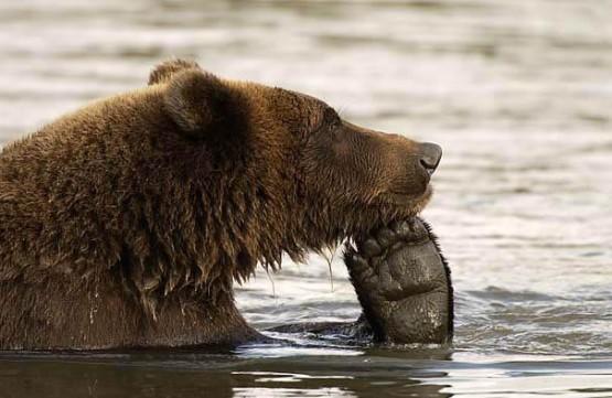 gambar beruang lucu lagi galau