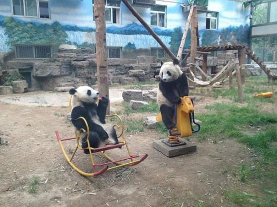 gambar beruang lucu layak manusia