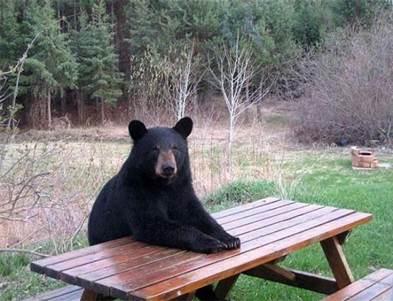 gambar beruang lucu menunggu galau