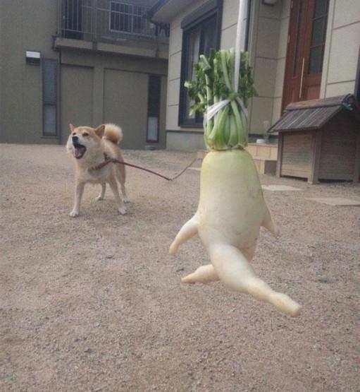 gambar sayuran yang lucu dan unik