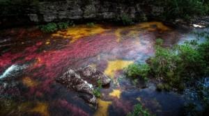 Cano Cristales (Crystal River atau Sungai Lima Warna), Kolombia Gambar Pemandangan ALam Terindah di Dunia