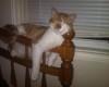 foto kucing lucu tidur di tangga