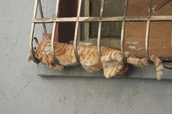 Kumpulan Gambar Kucing Lucu Tidur Dengan Posisi Unik