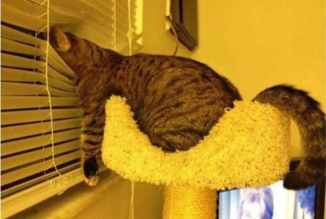 foto lucu banget kucing tidur