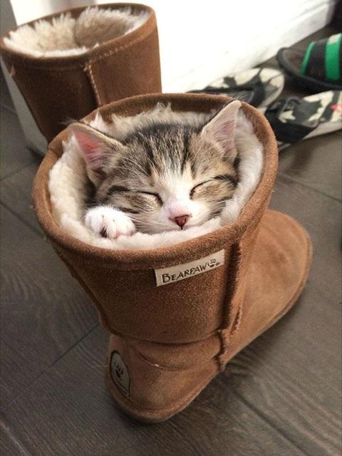 foto lucu kucing imut tidur
