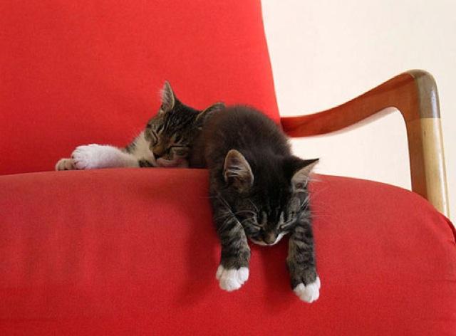 gambar anak kucing lucu tidur