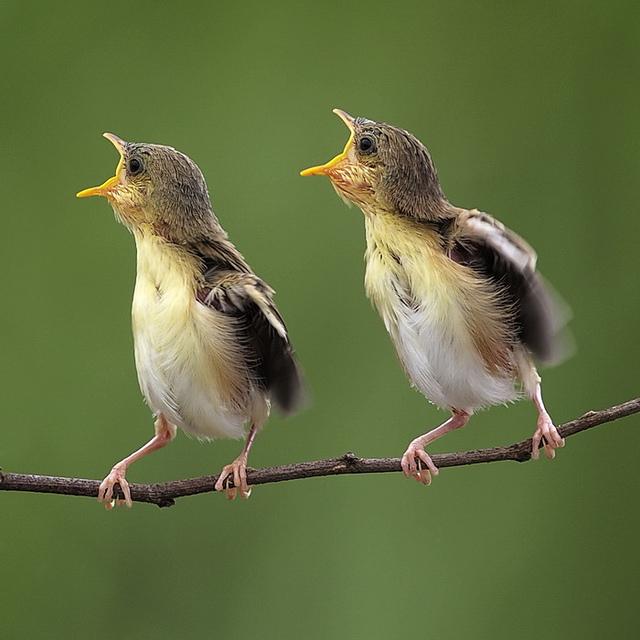 Gambar Dua Anak Burung Yang Indah Gambargambar Co
