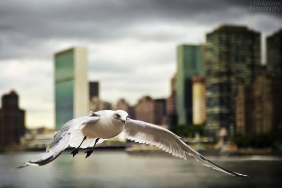 gambar gambar burung