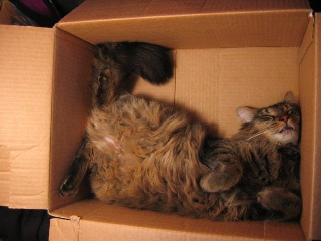 gambar kucing lucu imut tidur di kardus