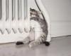 gambar kucing lucu tidur sembarangan