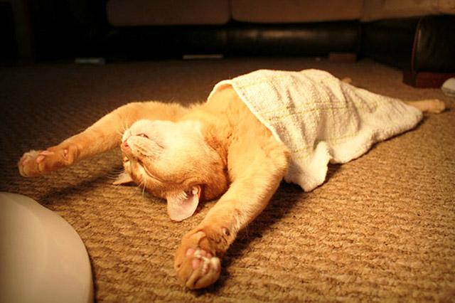 gambar kucing lucu tidur