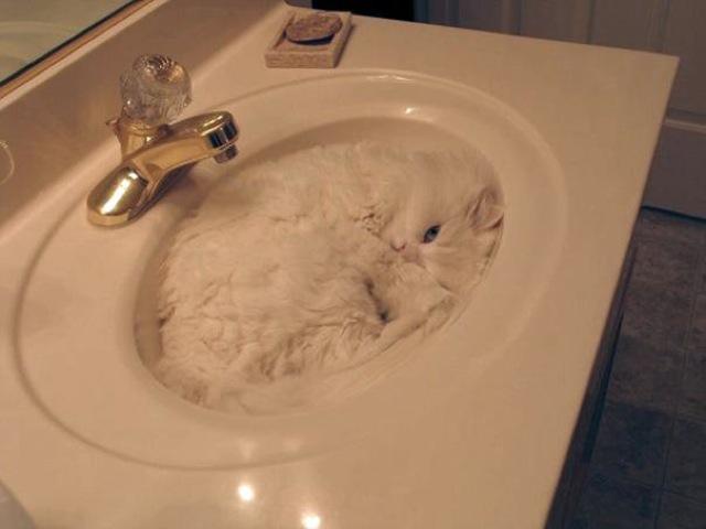 gambar kucing yang lucu banget