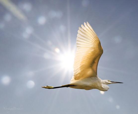 gambar unik burung terbaik