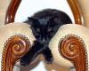 kucing hitam lucu tidur di kursi