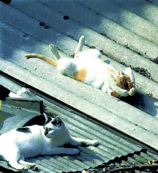 kucing lucu berjemur di atap