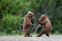 Gambar Beruang Dan Panda Lucu Imut