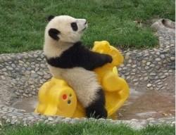 gambar-anak-panda