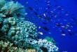 Koleksi Gambar Terumbu Karang Terindah Di Indonesia Dan Dunia