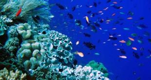 Gambar Terumbu Karang Laut