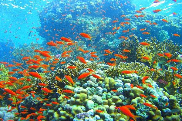 Gambar Terumbu Karang Terindah Di Laut