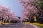 foto pemandangan cantik korea