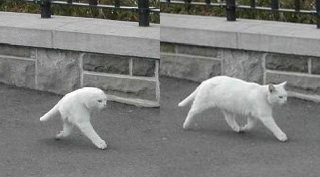 gambar aneh kucing di google street view
