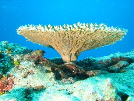 terumbu-karang-terindah-indonesia