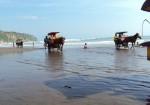 Gambar Pantai Parangtriris Yogyakarta Yang Indah