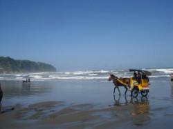 Gambar Pantai Parangtriris Jogyakarta