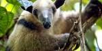Koleksi 10 Binatang Lucu Tapi Berbahaya