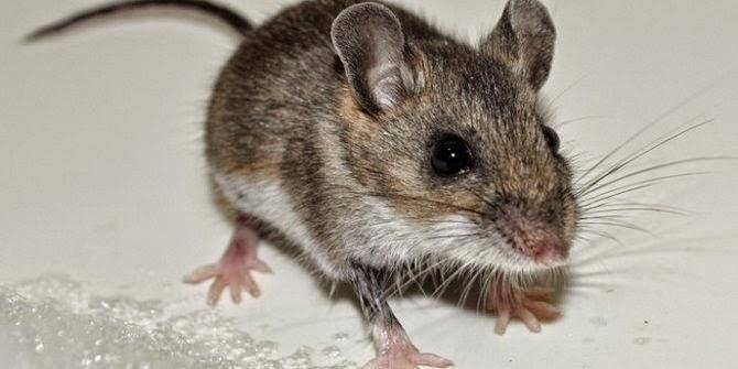 Koleksi 10 Binatang Lucu Tapi Berbahaya Gambargambar Co