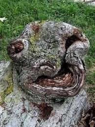 6 Bentuk Pohon Terunik dan Teraneh yang Menghebohkan Dunia 11