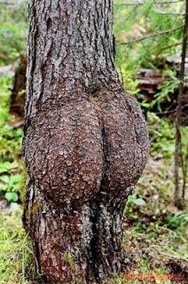 6 Bentuk Pohon Terunik dan Teraneh yang Menghebohkan Dunia 4