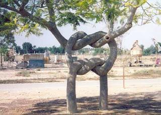 6 Bentuk Pohon Terunik dan Teraneh yang Menghebohkan Dunia 5