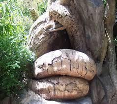 6 Bentuk Pohon Terunik dan Teraneh yang Menghebohkan Dunia 6