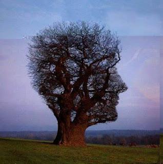 6 Bentuk Pohon Terunik dan Teraneh yang Menghebohkan Dunia