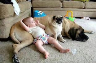 Gambar Santai Anjing