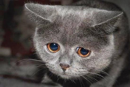 Gambar Sedih Kucing