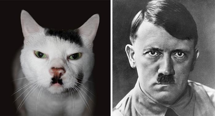Adolf Hitler vs Kucing