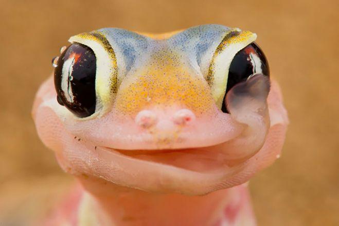 Ketika Para Reptil Berakting Imut dan Lucu, Bakal Bikin Kamu Gemes Juga Deh