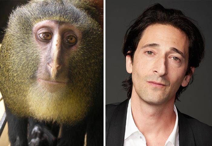 Adrien Body vs Monyet