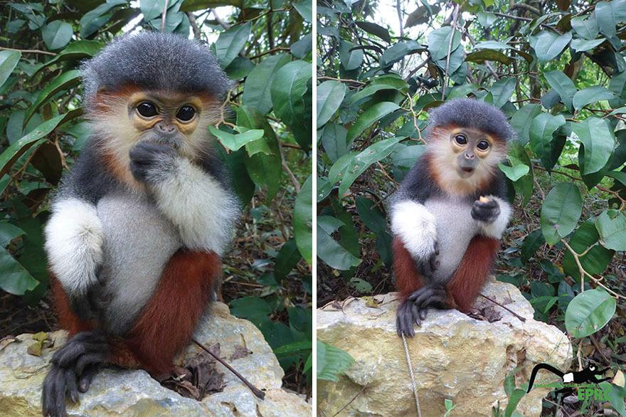 Bayi-Bayi Lucu Hewan Primata yang Hampir Punah, Harus Lihat!