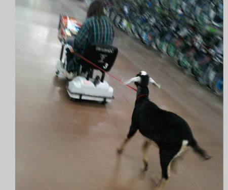 Saat Orang-Orang Unik Ini Belanja di Walmart